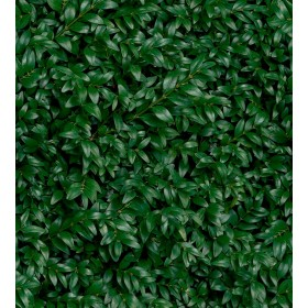 Плитка Panaria Glam GREENWALL E PG9GM9E 50X100